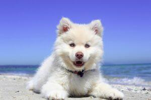 5 curiosità sui cani che ancora non sapevi
